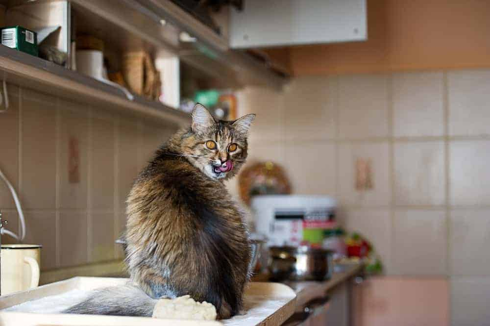 keep cats off counters