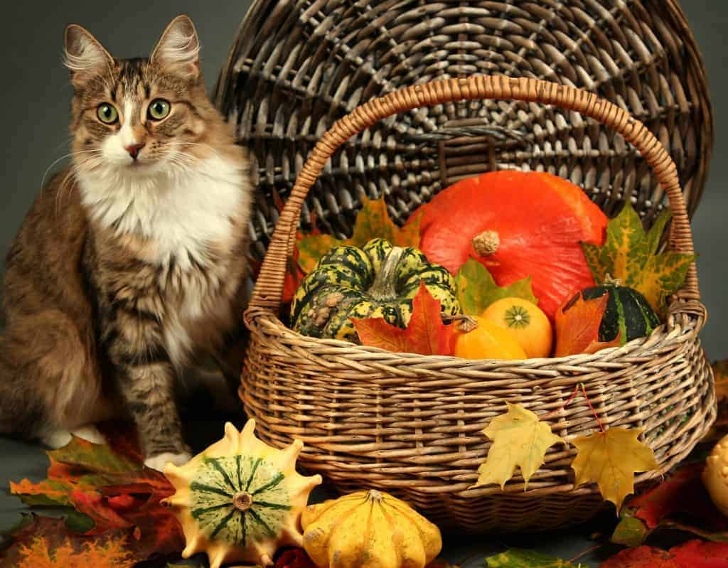 thanksgiving for pets