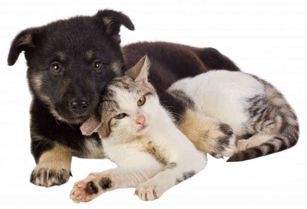 close-up puppy and cat, isolated on white