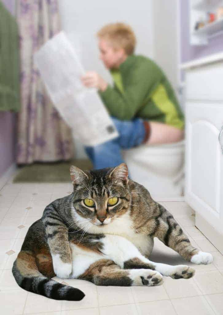 Do your cats love bathrooms? Does your cat follow you to the bathroom, paw-pat under the toilet door, yowl for attention when you want privacy?