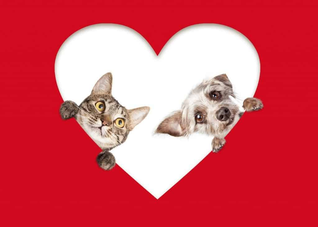 Valentines for Pets