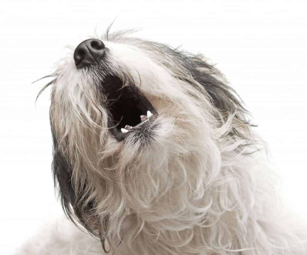 Dogs bark to communicate--so what's he saying?