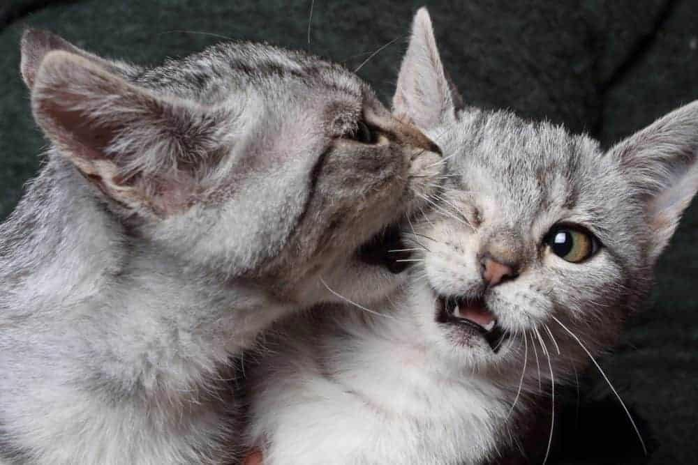 Why We Think Cats Are Cute
