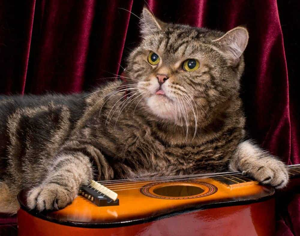 cat music therapy