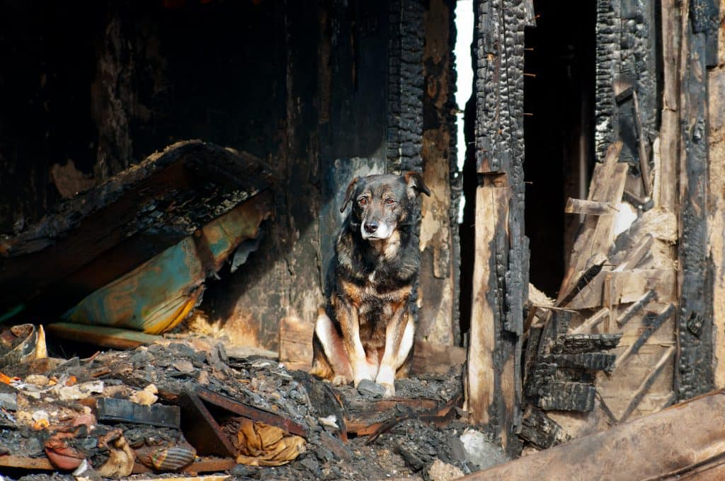 burned house dog smoke inhalation