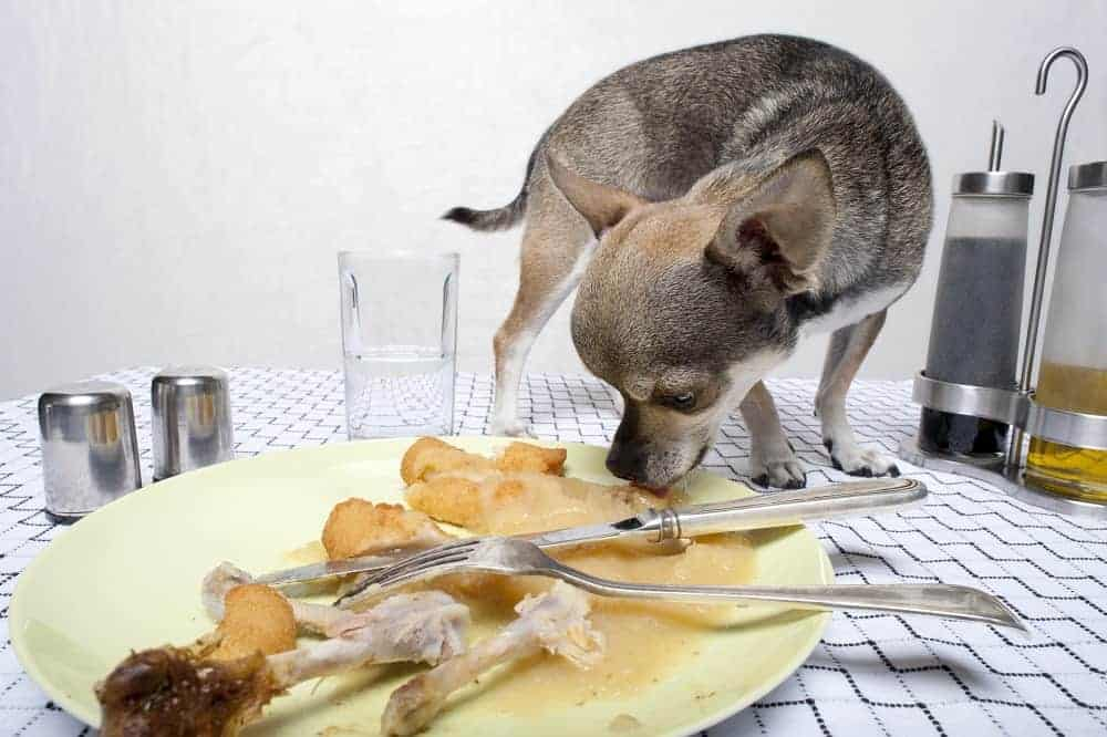 table food for dogs