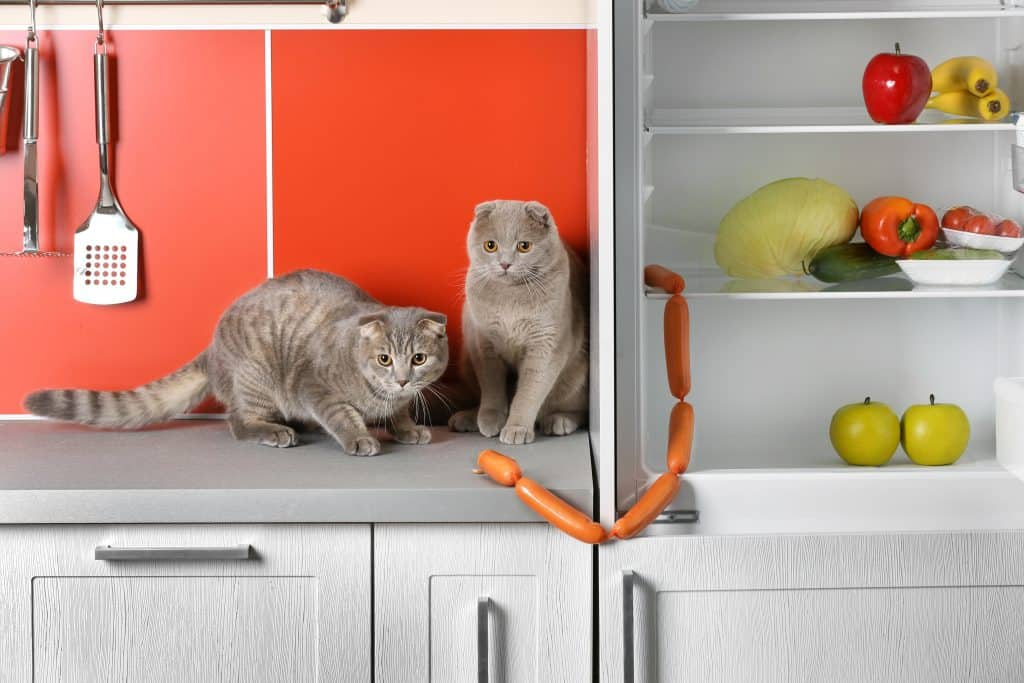 cats on counters
