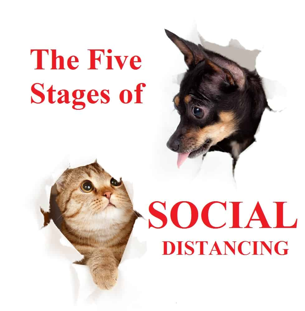 stages of social distancing